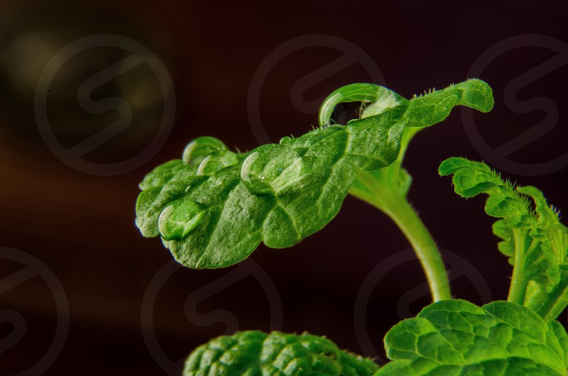 Green leafsdew photo