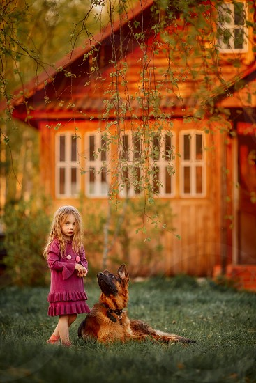 Portrait of a little girl with German shepherd dog at sunny evening  photo