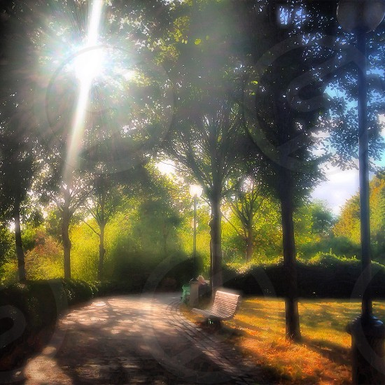 brown wooden bench near trees photo