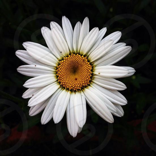 Good morning. #flower #beautiful  photo