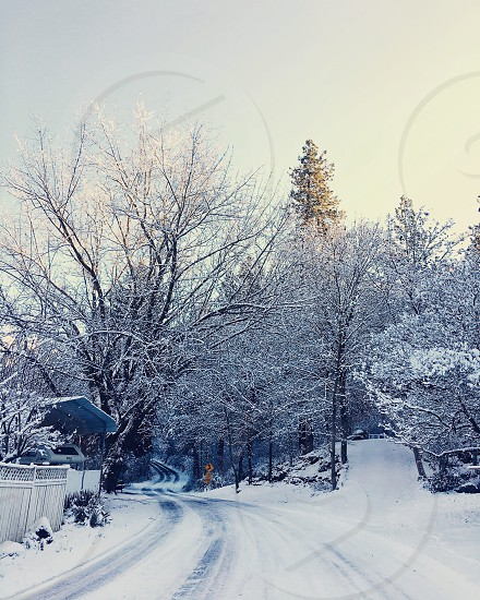 white and black curve road beside house with brown gate covered with snow surrounded with brown trees photo