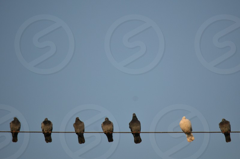 6 black birds and 1 bird on wire photo