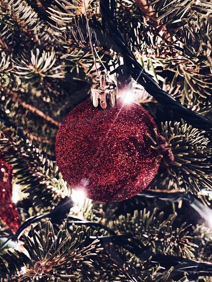Happy Holidays  photo