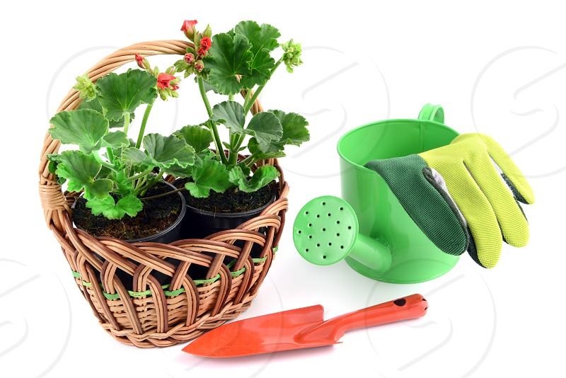 basket with geranium flower. aside a small garden shovel and gardening gloves photo