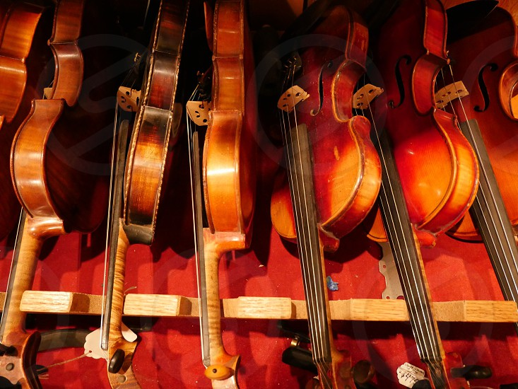 Violins and Violas  photo