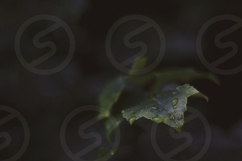 green wet leaf photo