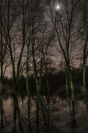 swamp night photo