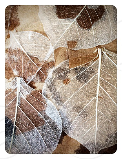 Beautiful dried leaves photo