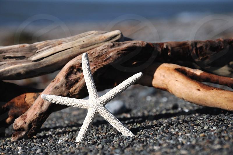 white starfish on shore photo