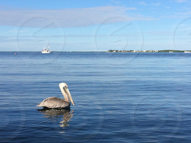 Bird on the key largo florida bay photo