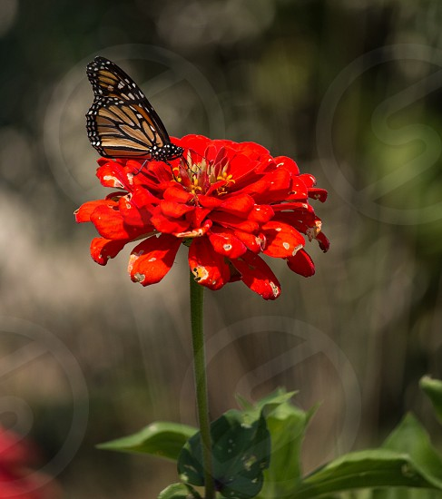Spring butterfly flower red nature  photo