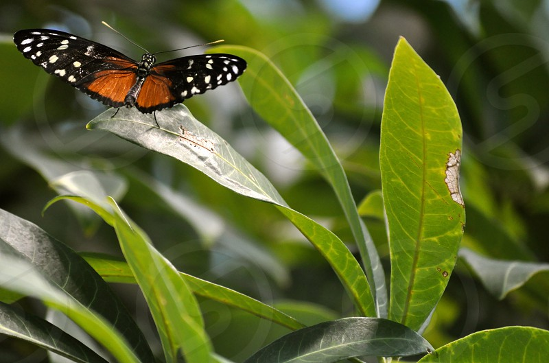 Butterfly resting on a leaf photo