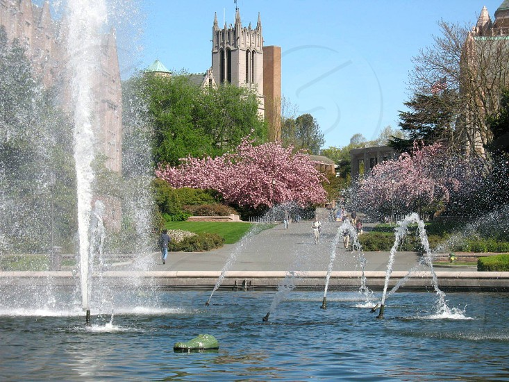 fountain campus water buildings academia academic trees cherry trees blue sky peaceful inspirational serene photo