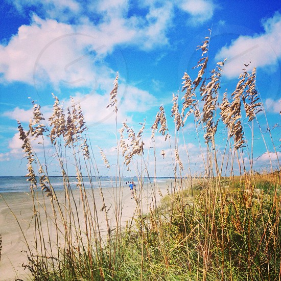 grass near a beach photo