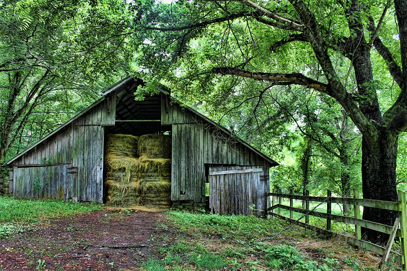 Old weathered barn in the woods holds bales of high stacked to the ceiling. photo