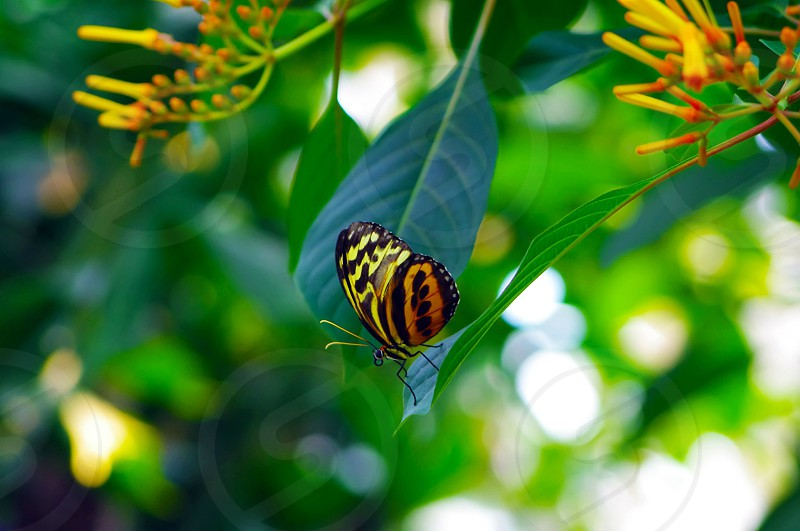Butterfly. photo