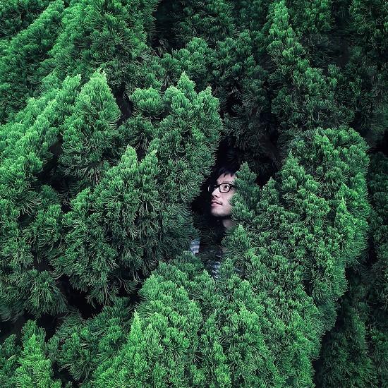 man hiding on pine tree photo