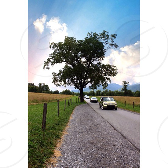 3 cars on the road beside a tree photo