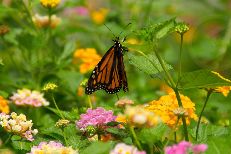 orange and black butterfly photo