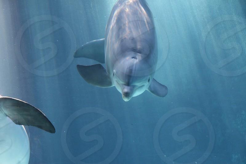 Beautifully back lite dolphin  photo