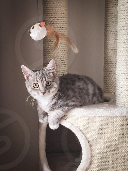 Curious  cat kitten pet animal photo