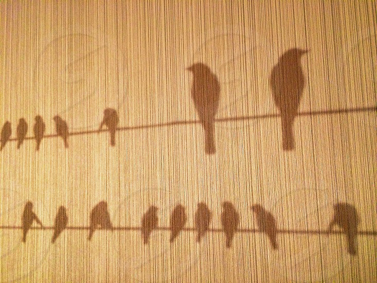 Birds of a feather flock together - wall paper photo