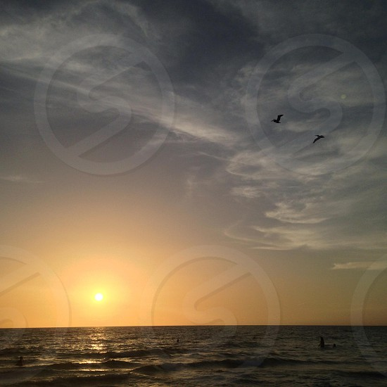 Pelicans and sunsets photo