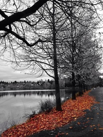 tree grayscale photography photo