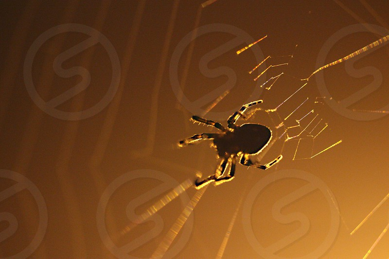 brown and black spider photo