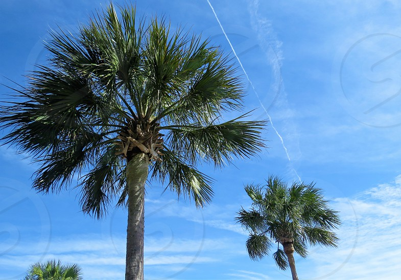 Tropical Palm Trees photo