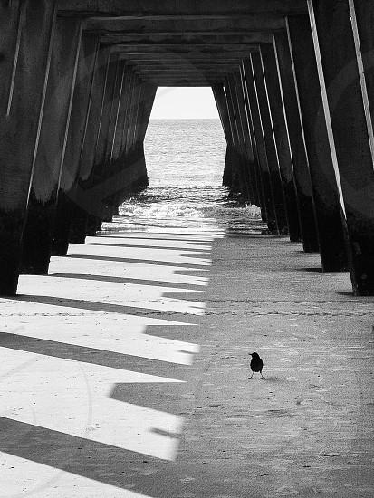 pier & on looker... photo