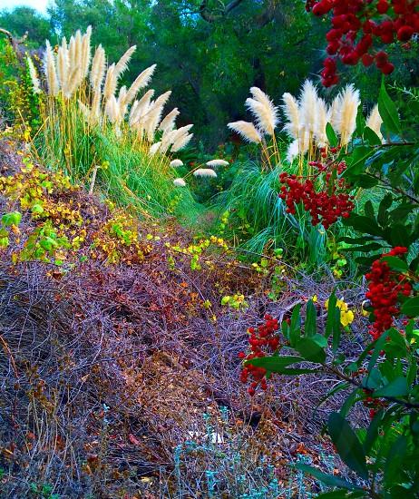 Fall in Orange County CA (Oak Canyon Nature Center)  photo