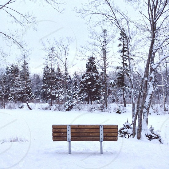 brown wooden bench on snow field photo