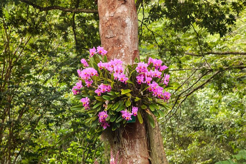 pink flowers on tree photo