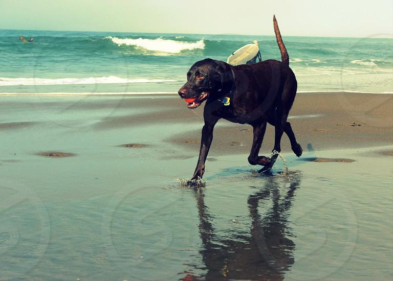 Dog at Ocean Beach San Francisco  photo
