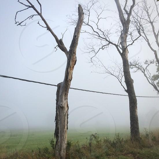 brown leafless tree near black wire photo