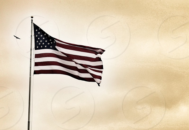 American Flag with Soaring Bird photo