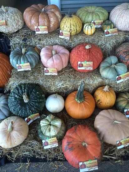 Pumpkins / gourds in hay photo