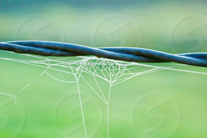Tiny spider web covered with dew on barbed wire photo