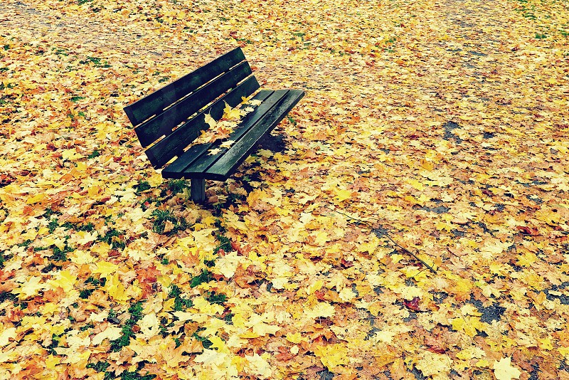 yellow maple leaves on black wooden bench photo