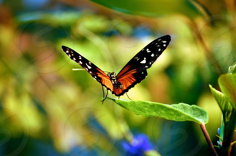 Butterfly sits on leaf photo