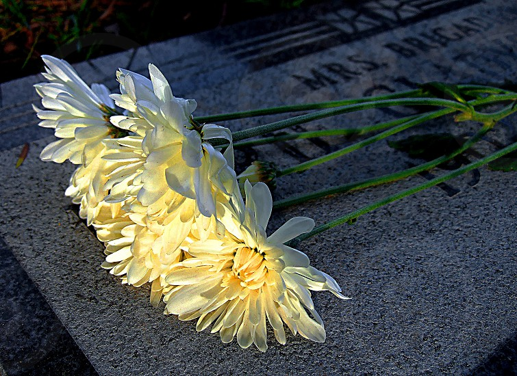 Flowers have been laid on a grave. photo