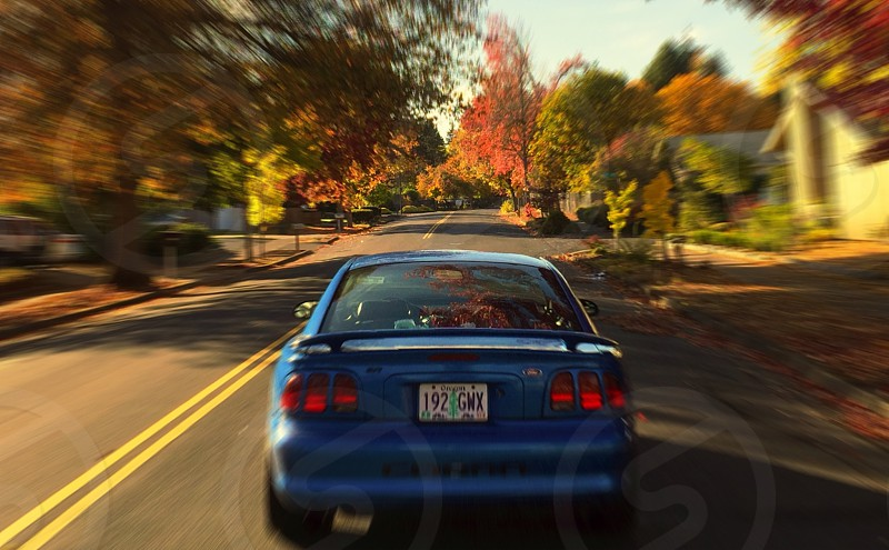 Cobra SVT Fall SN95 Mustang Ford Muscle Car American Muscle photo