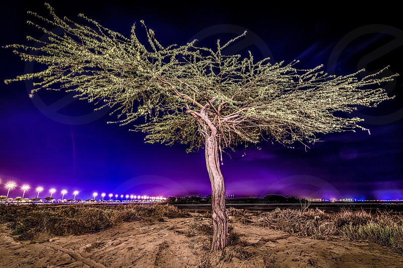 Night tree lights street sculpted enlightened glow plants landscape photo