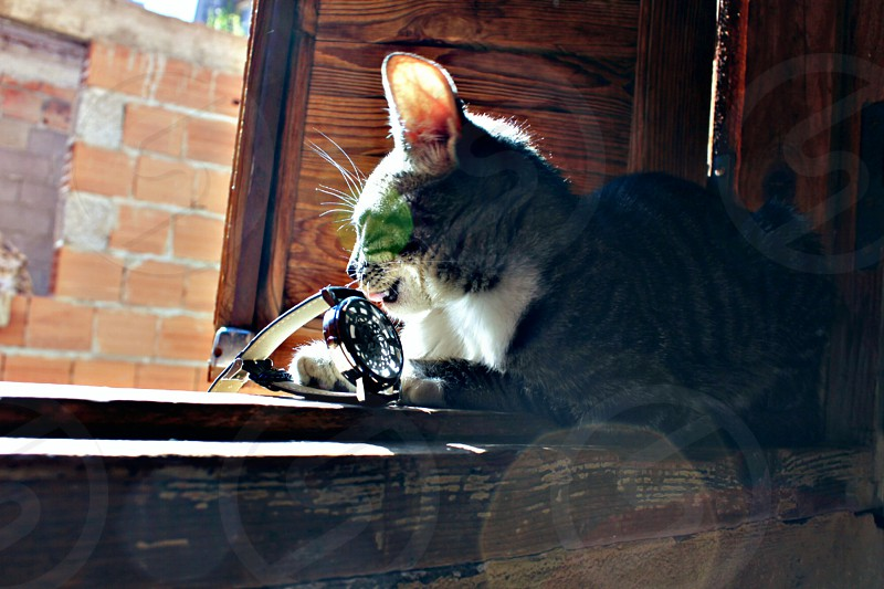 Wristwatch and cat photo