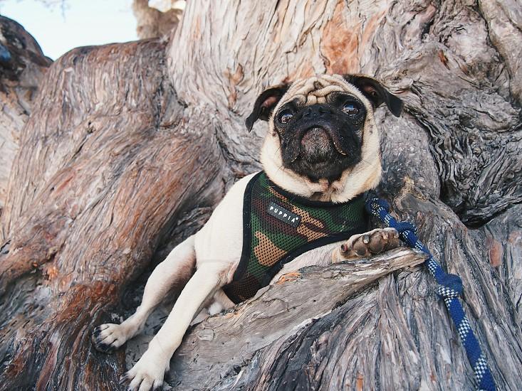 Zion on Tree photo