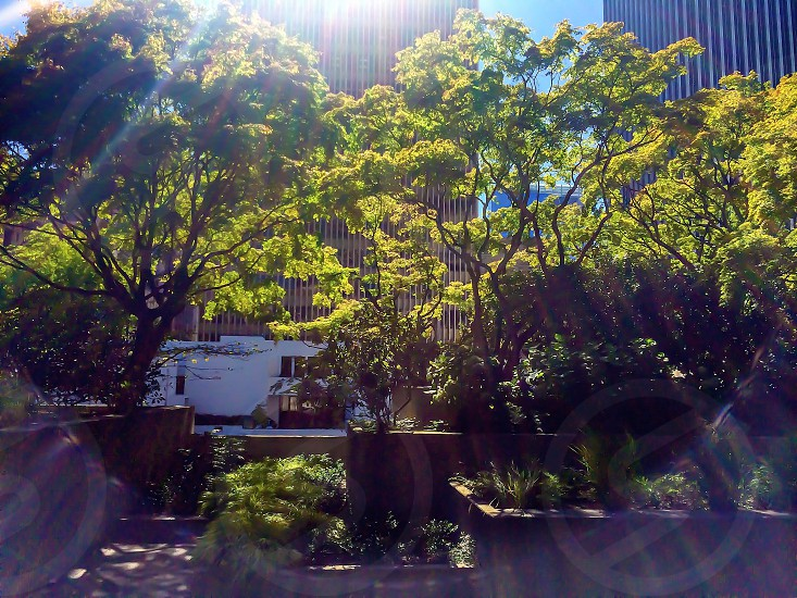 Urban garden landscaping potted trees courtyard lawn trimmed photo