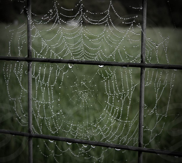 Morning dew caught on a spider web photo