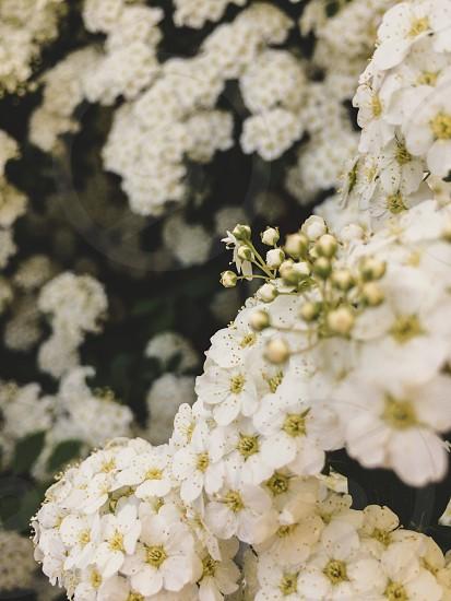 Spring flower bloom blooming nature macro  photo