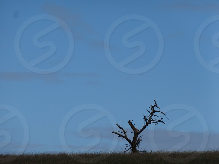 grass lands with 1 dead tree photo